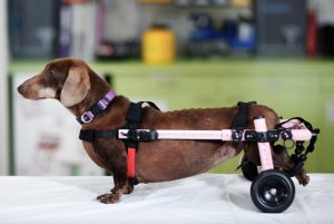 Walkin Wheels Wheelchair