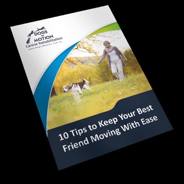 Dogs-in-motion-Brochure-mockup