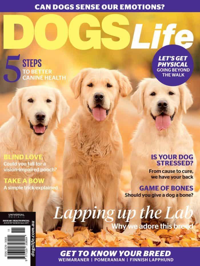 Dogs-Life-Magazine-Labs