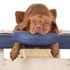 Dogs in Motion article on the benefits of massage for older dogs by Michelle Monk